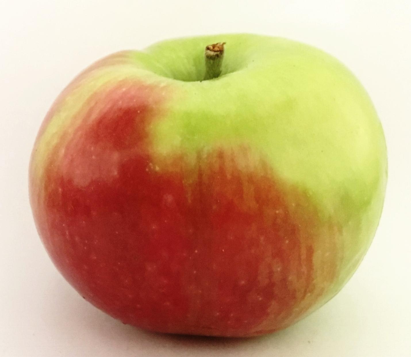Snow Apple