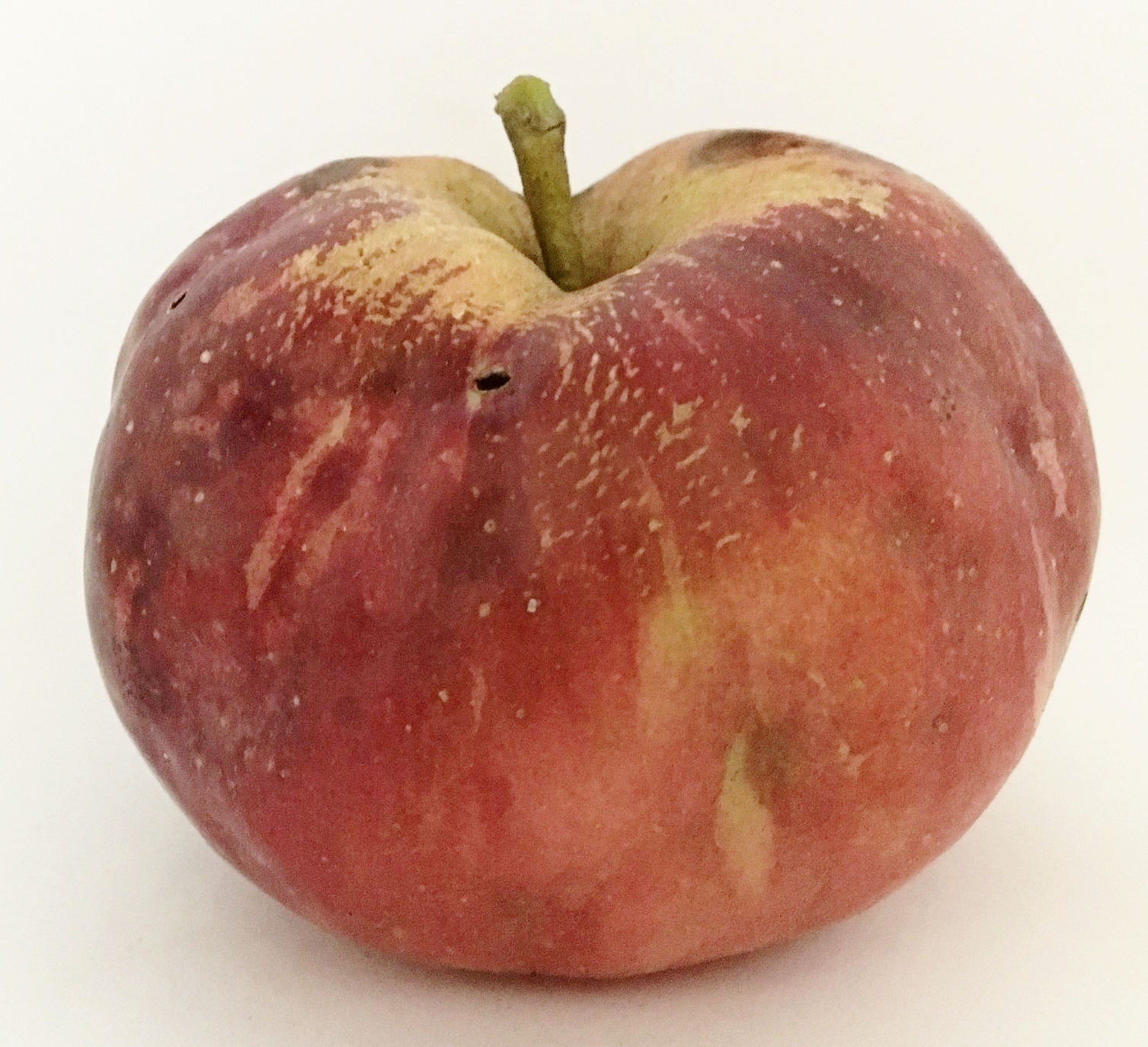Shiawassee Apple