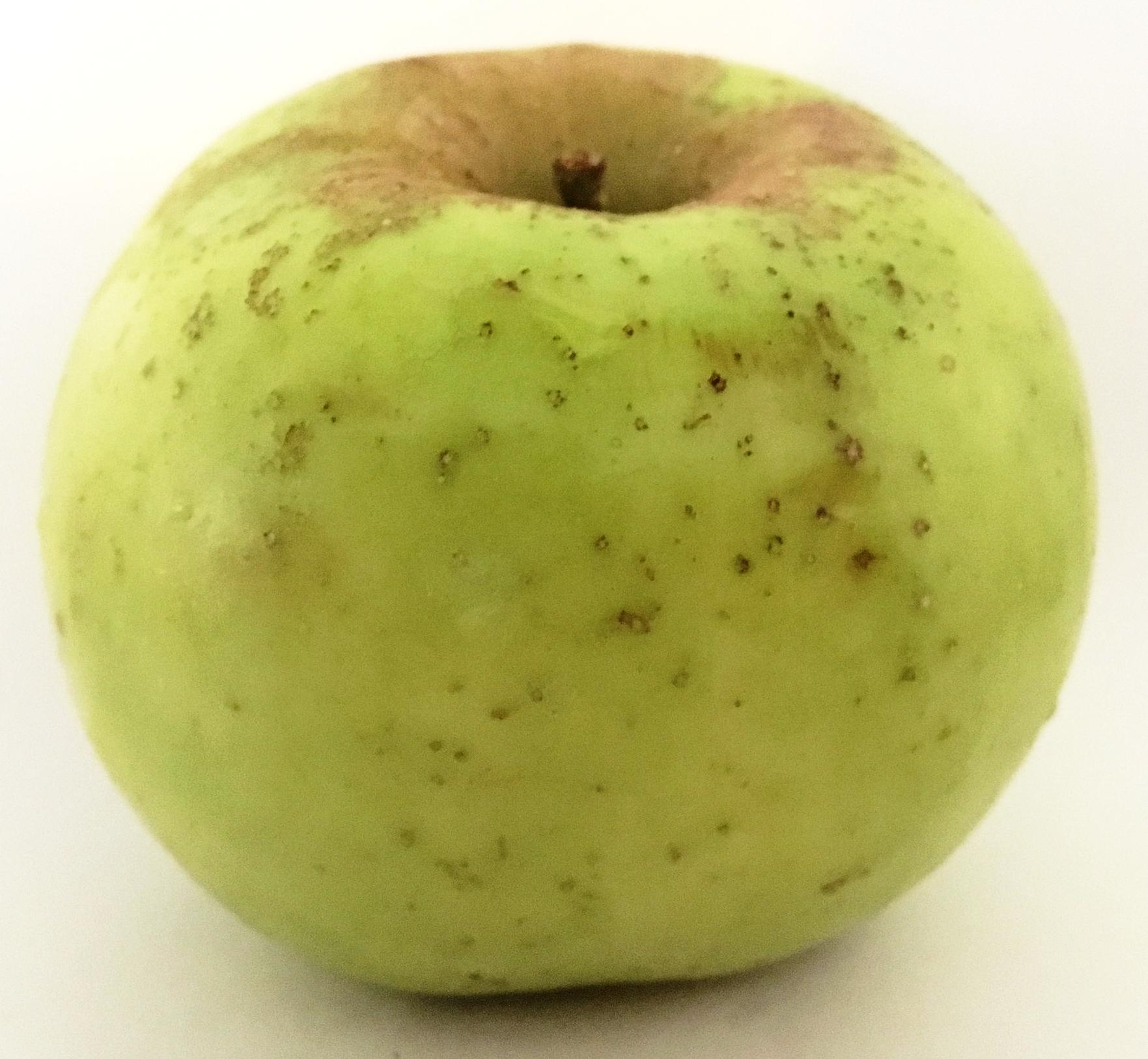 Northwestern Greening Apple