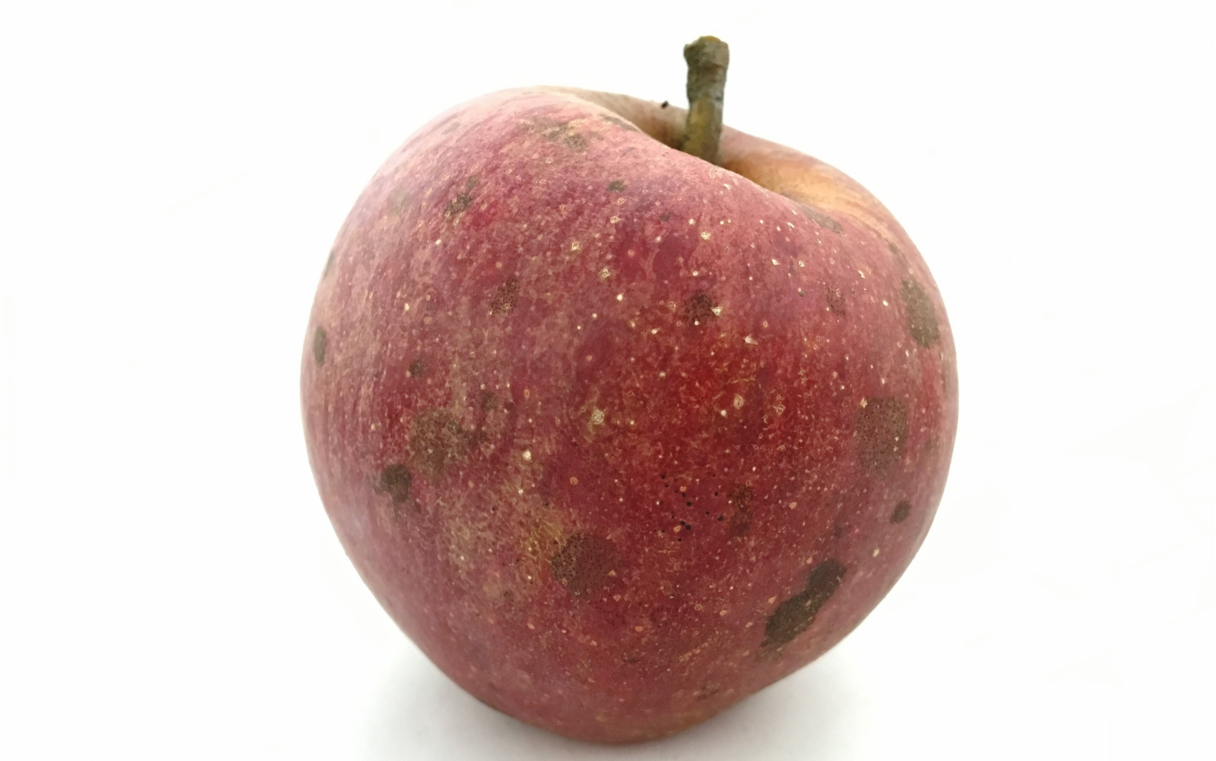 Cider Apple Evaluations Link