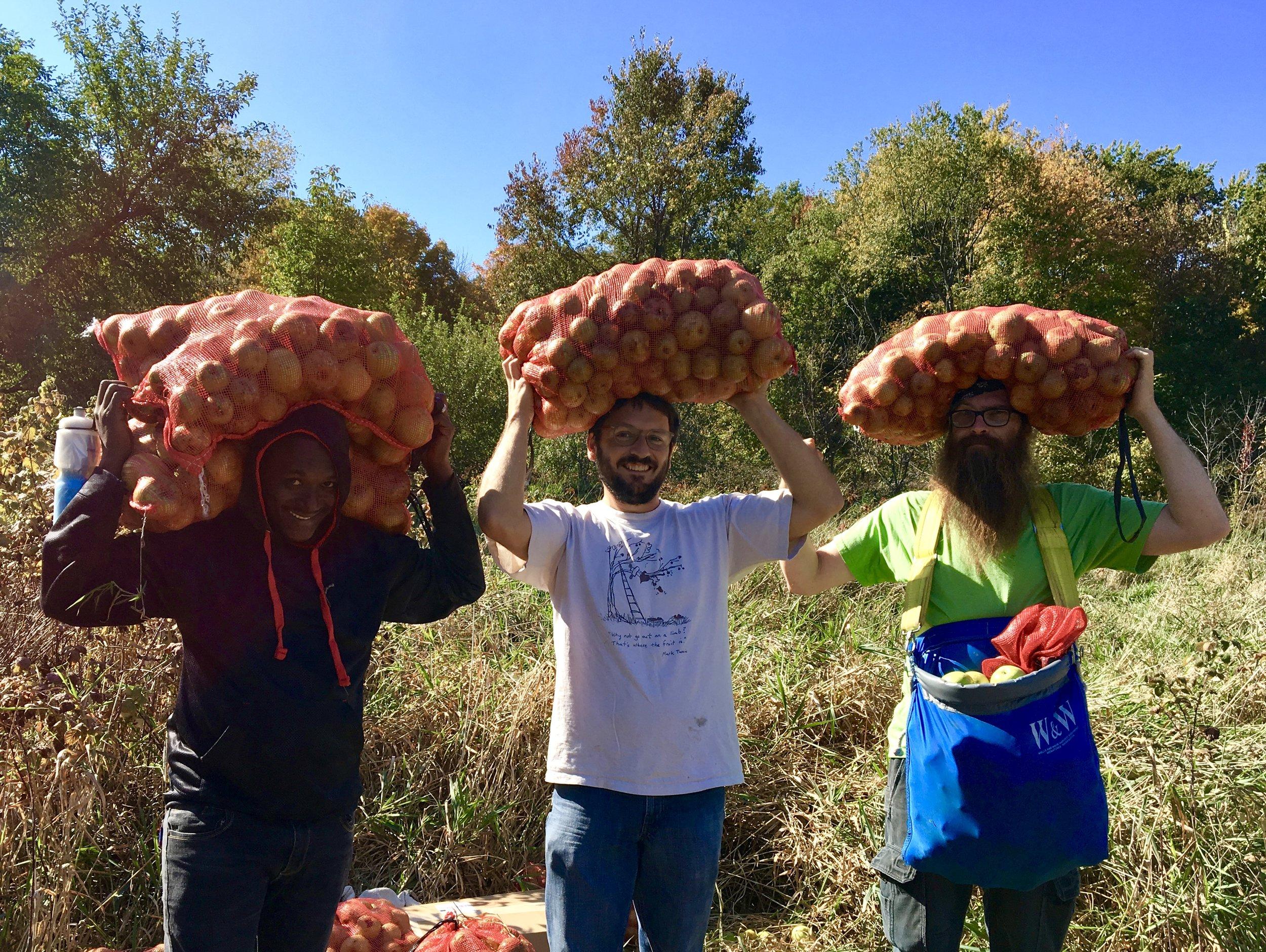 Above:  Osieda, Matt, and Bergere hauling apples on their heads