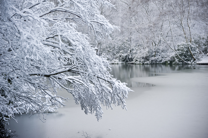 012435087-snow-covered-tree-overhanging-.jpeg