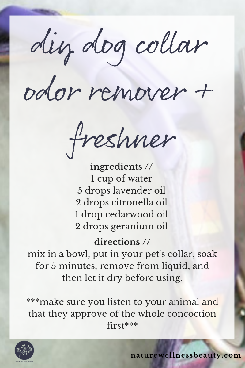 don't throw away your dog's stinky collar until you try this DIY dog collar odor remover and freshener recipe.