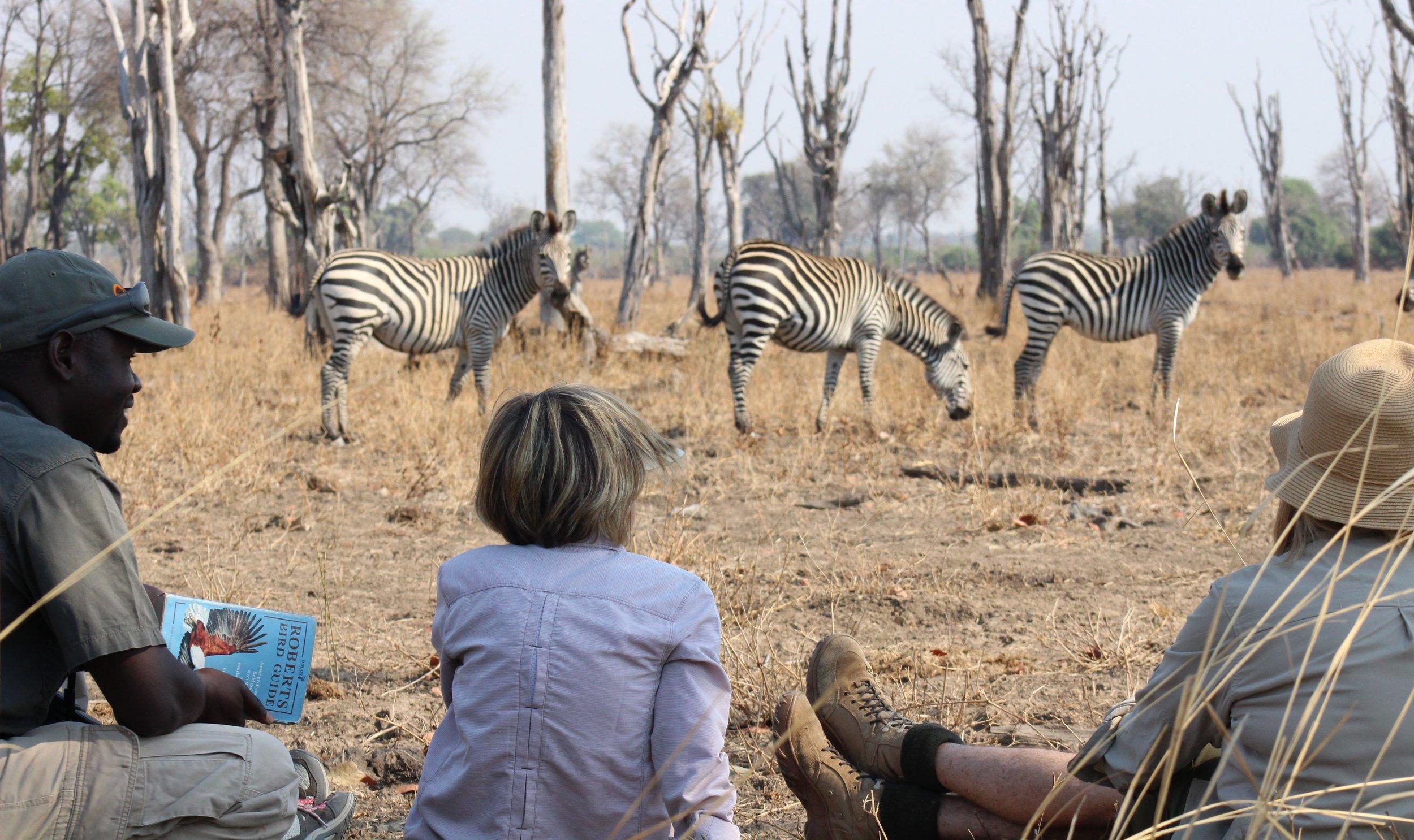 Walking with Zebras.JPG