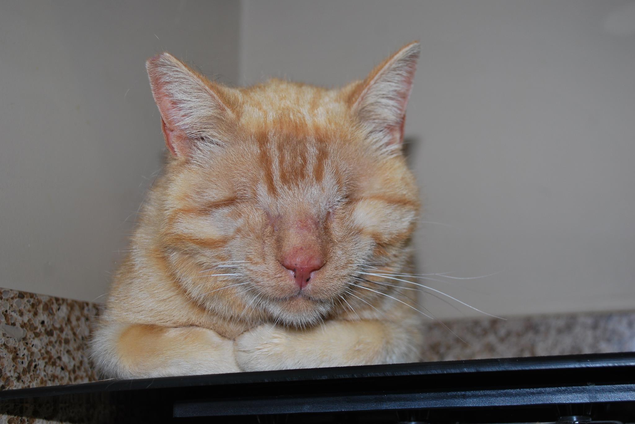 Stevie - blind kitties do remarkably well.
