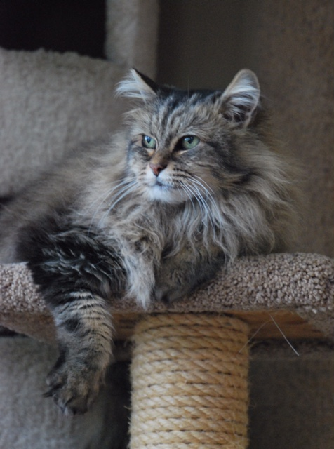 If you don't want the chaos of kittens bouncing around your house, consider fostering an adult or special needs cat. Like Tasha, pictured here, many adult fosters just need a place to call home before finding their forever home.