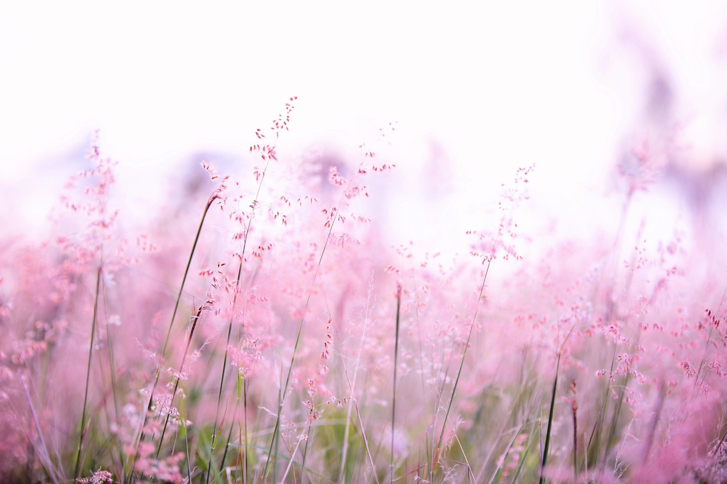 blur-color-depth-of-field-1128797.jpg
