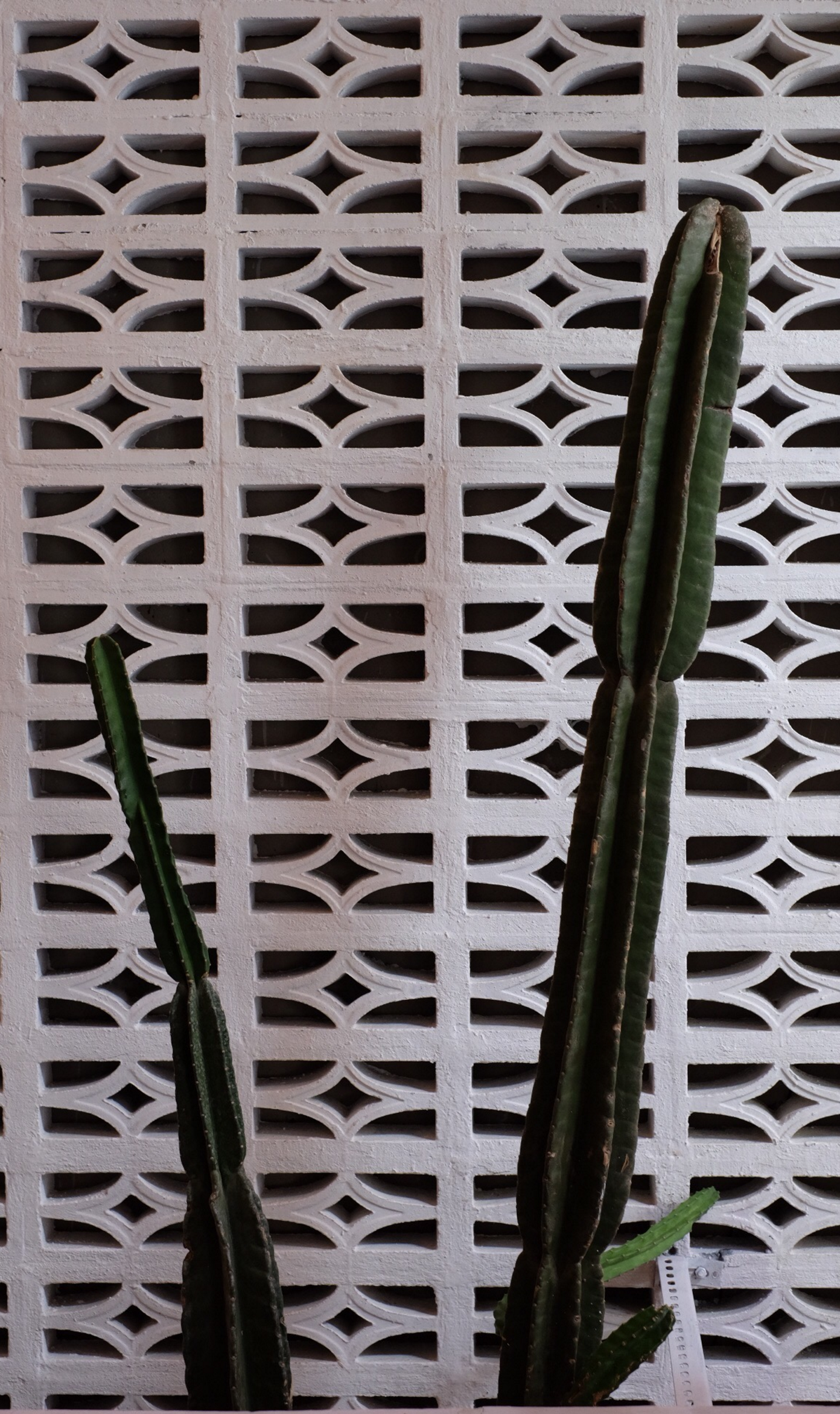 cactus 2.jpeg