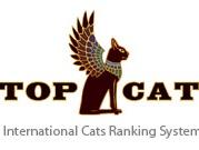 top cat.png
