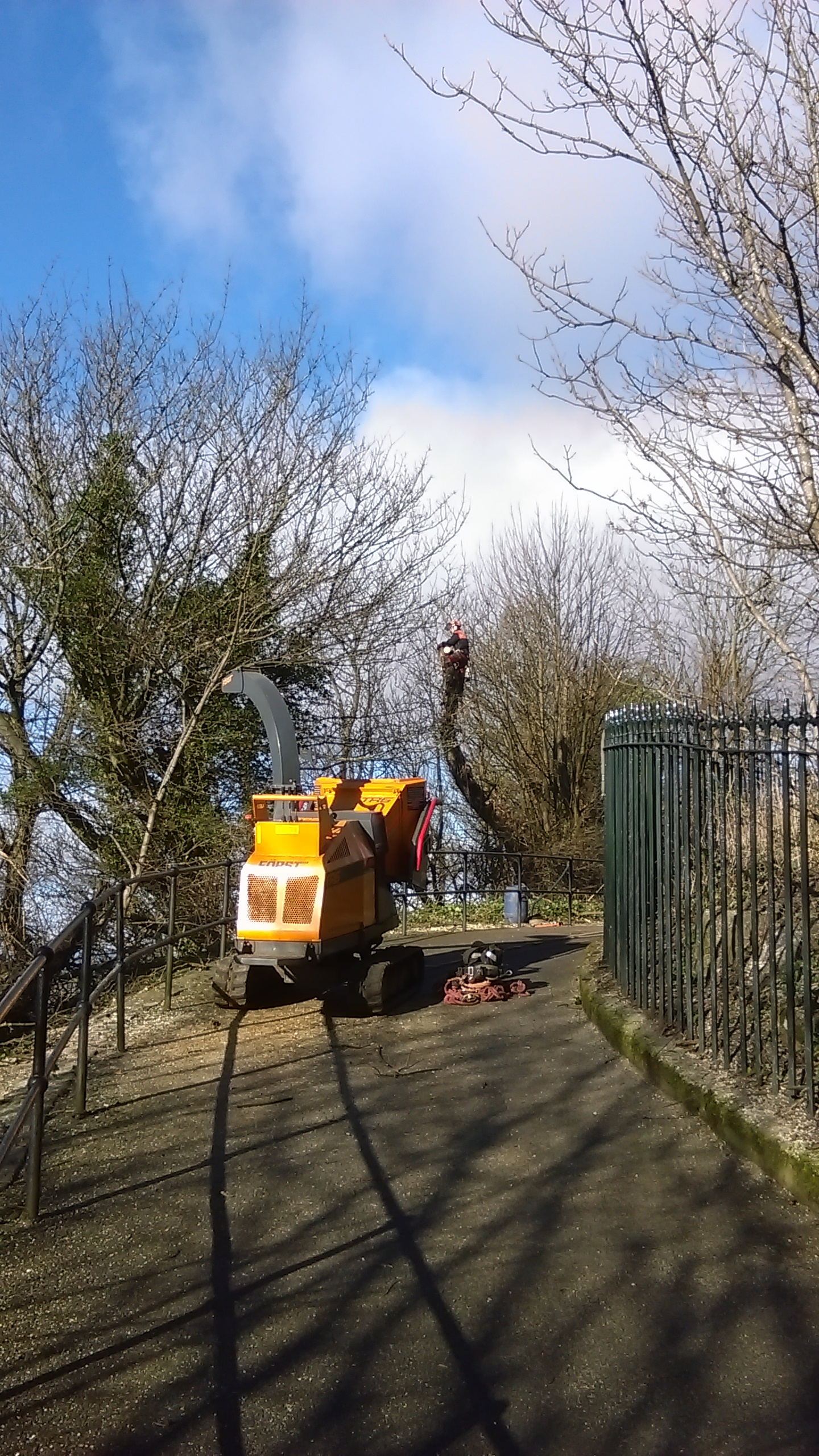 Tree surgery on historic site.jpg