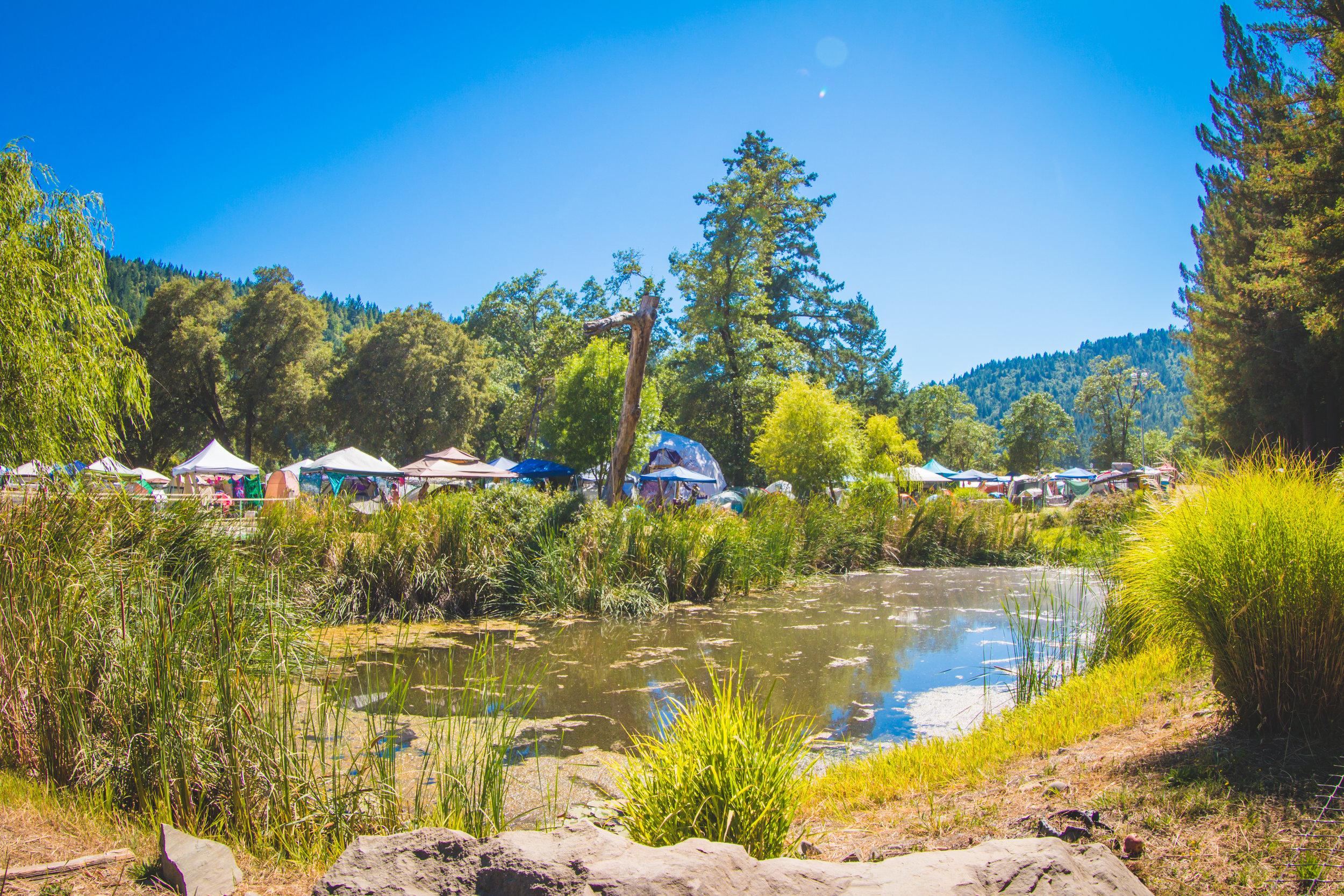 meadow-camping-festival.jpg