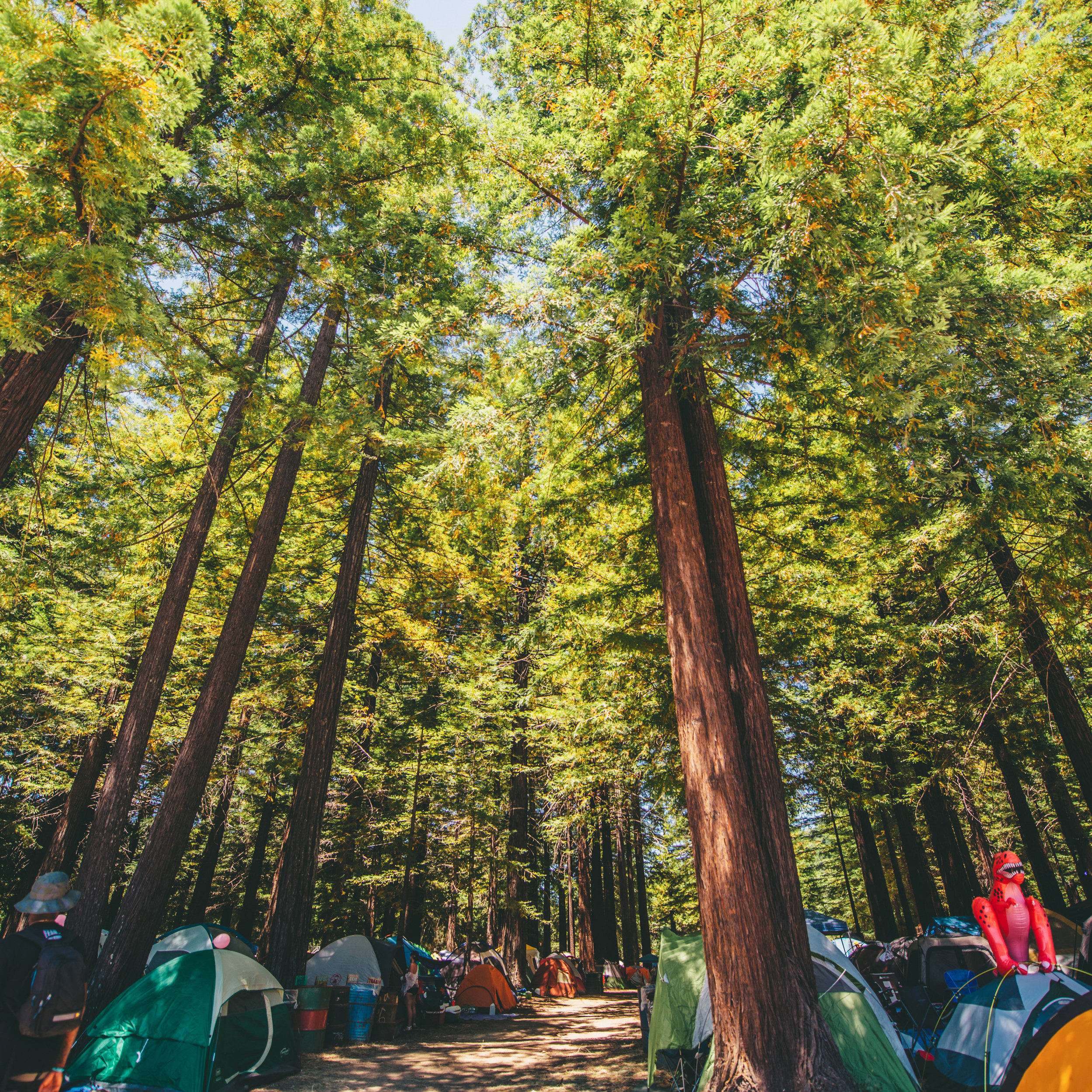RESERVED REDWOOD CAMPING -