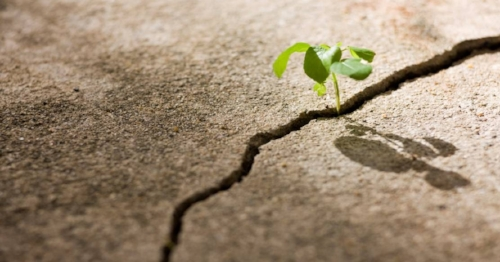 seedling and concrete.jpg