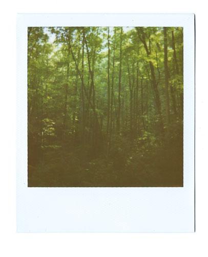04-PisgahForest.jpg