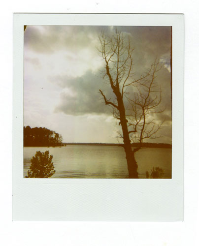 07-Mistletoe03.jpg