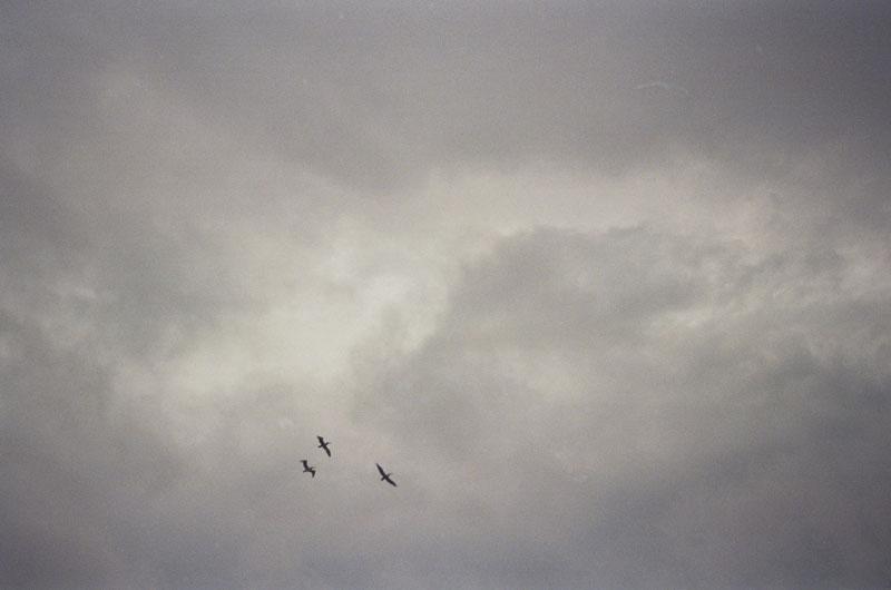 08-Pelicans.jpg