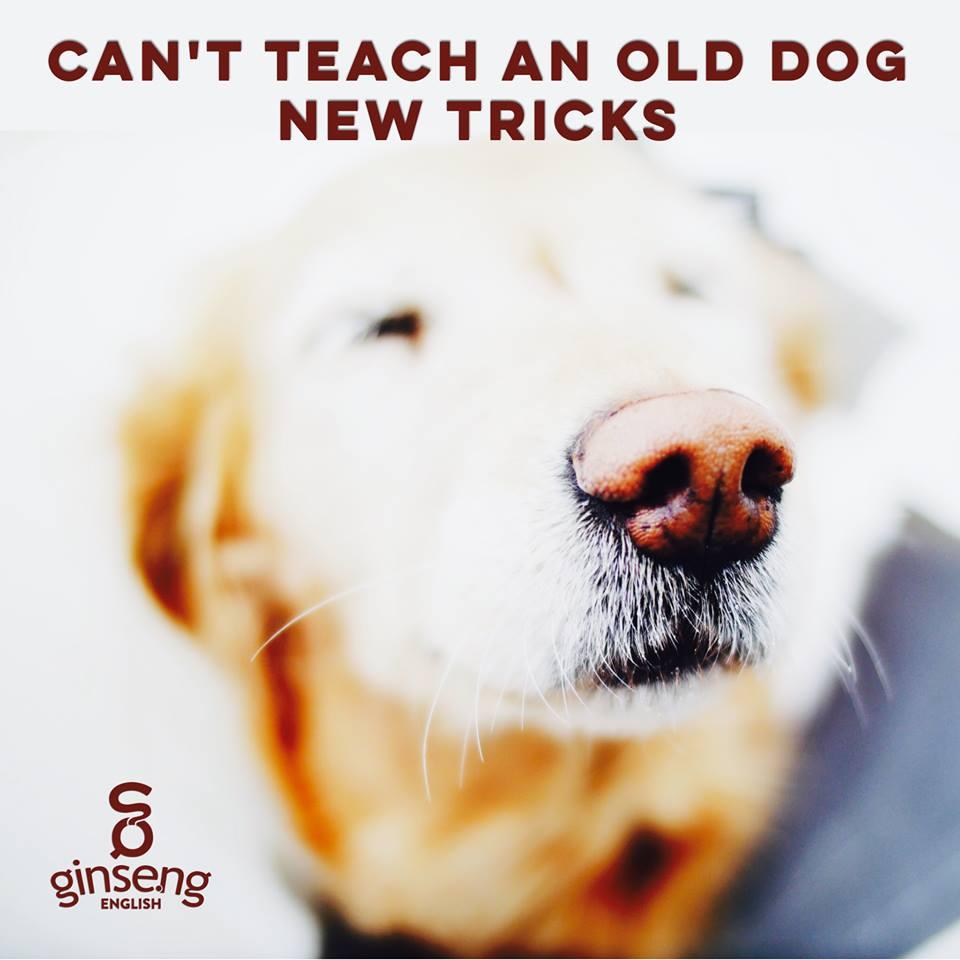 teach old dog new tricks .jpg