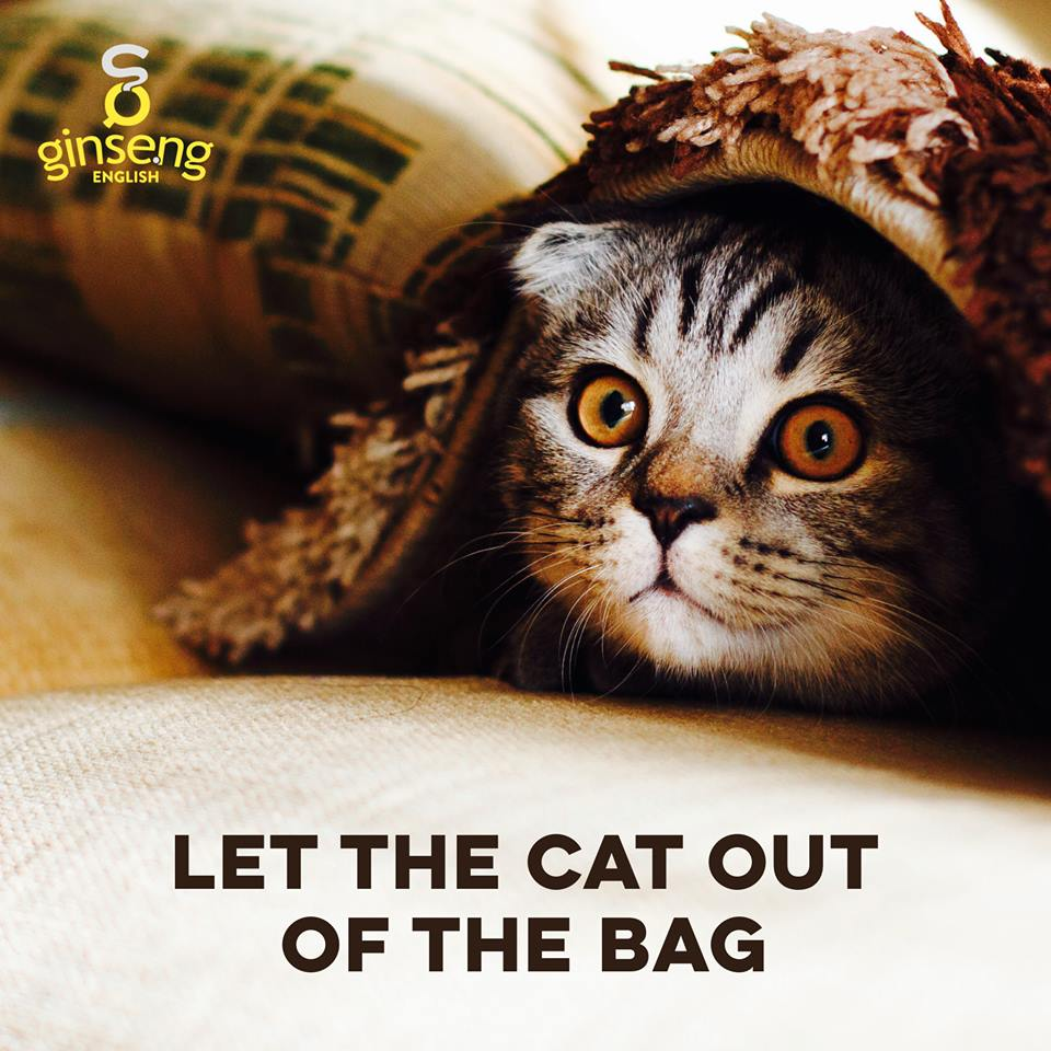 cat out of bag.jpg