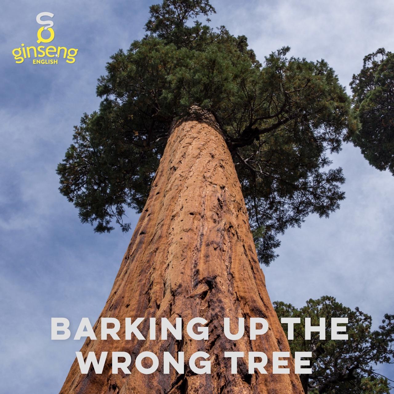 barking up wrong tree.jpg