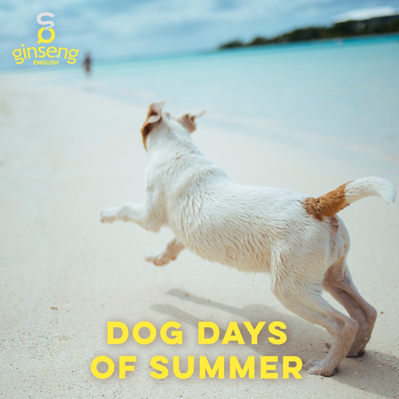 Check out another summer idiom in our Dog Idiom blog post!