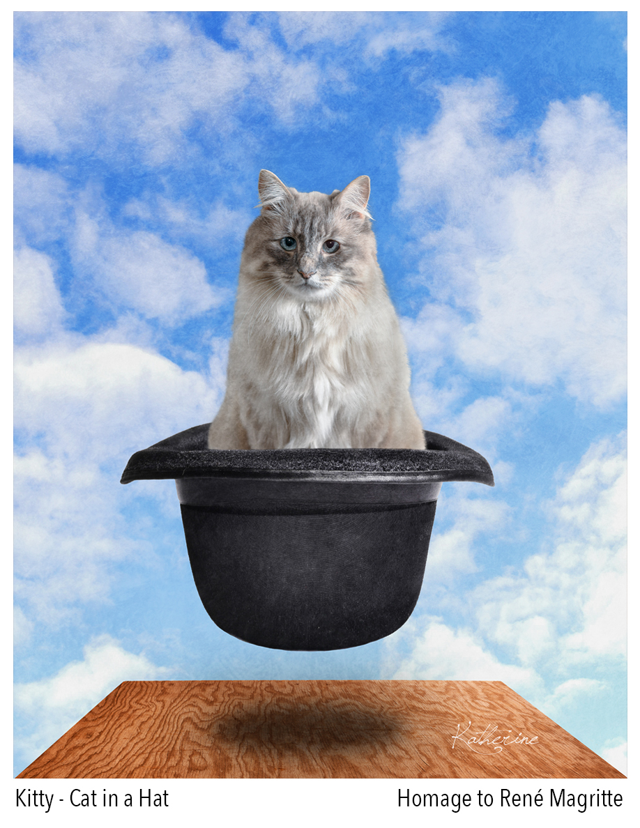 Vancouver_pet_photography_cat_in_a_hat.jpg