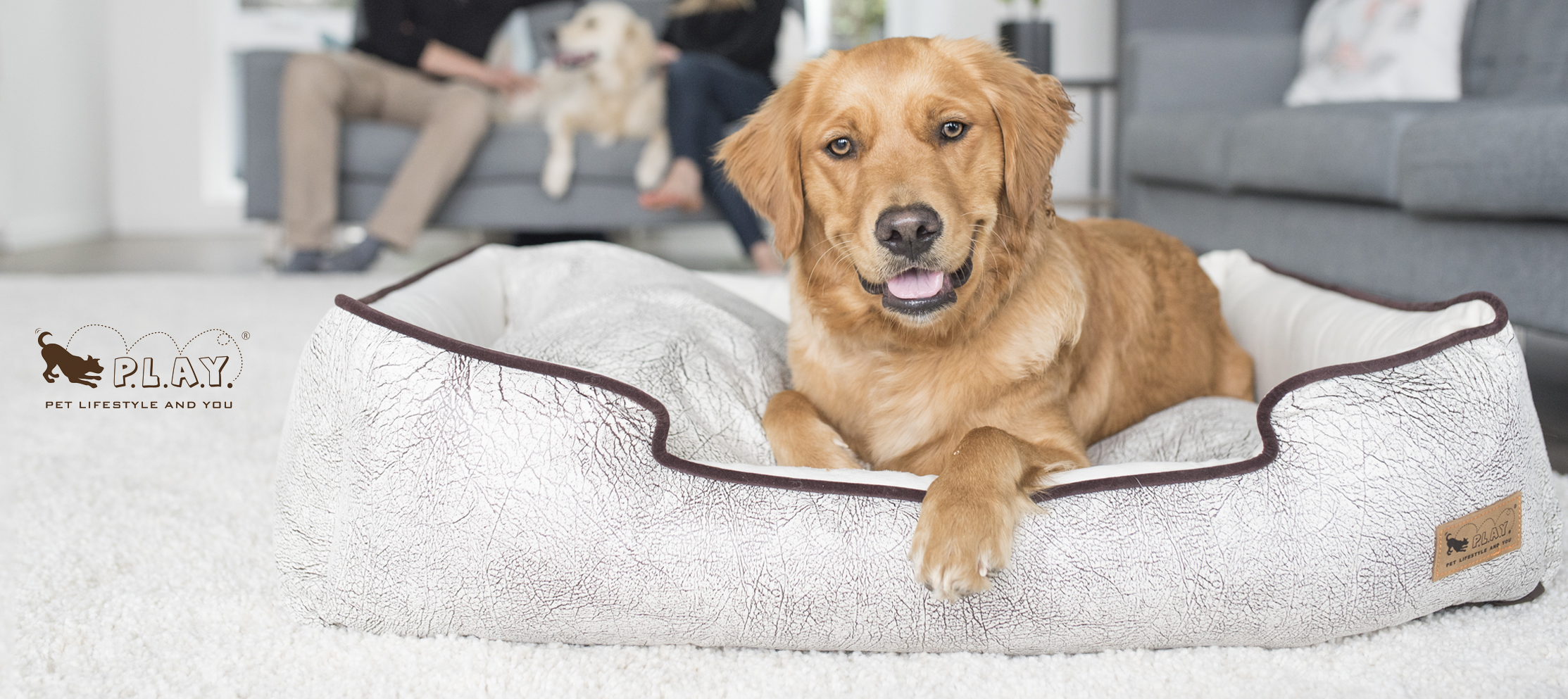 comercial_Pet_Photography_Vancouver-dog-bed.jpg