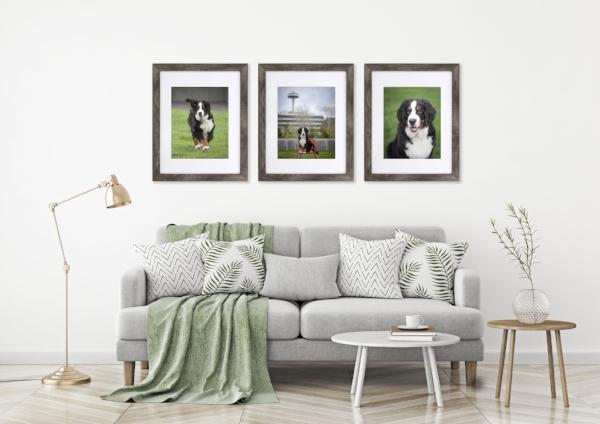 Vancouver_Pet_Photography_Framed_Prints.jpg
