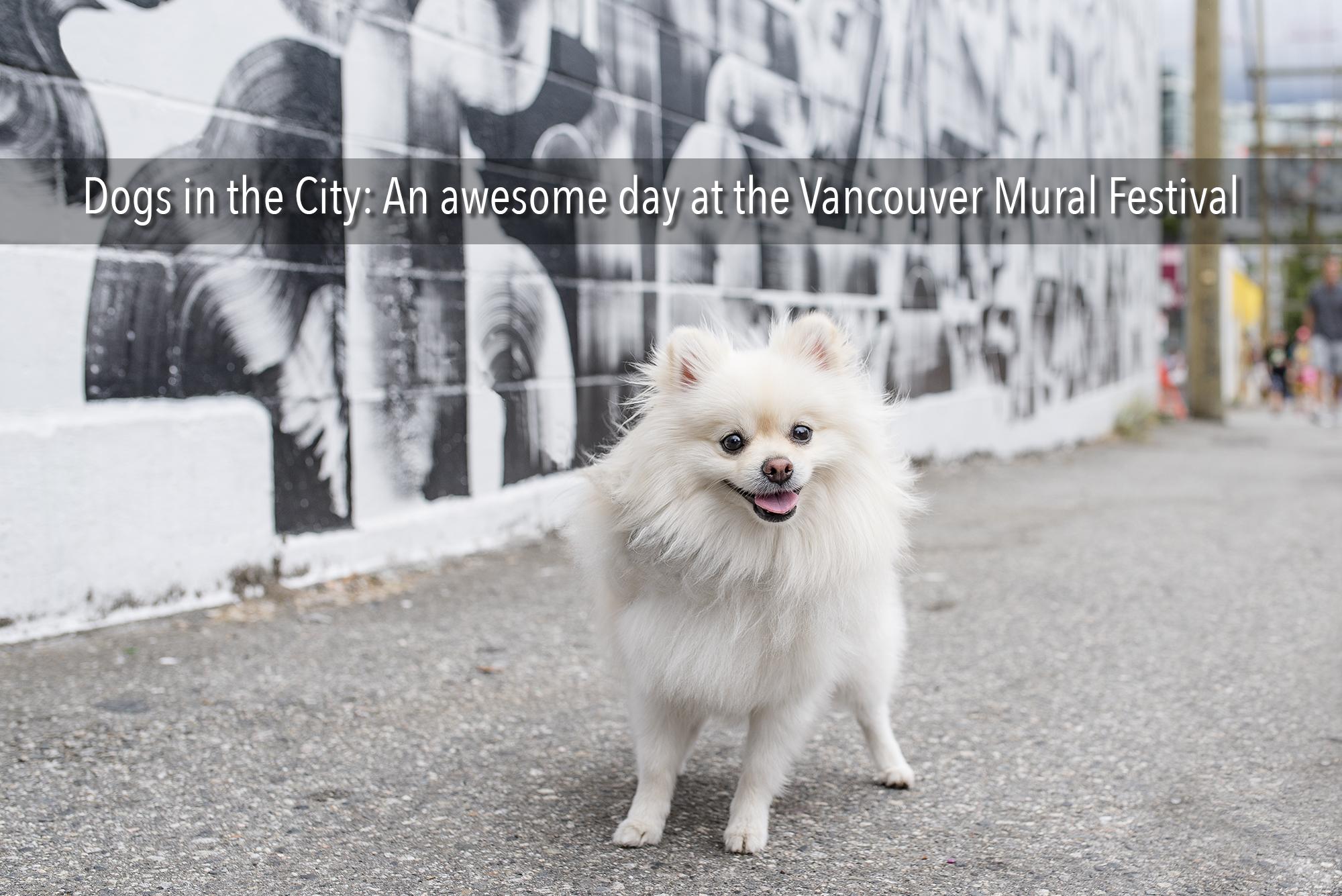 Dog_at_Vancouver_Mural_Festival.jpg