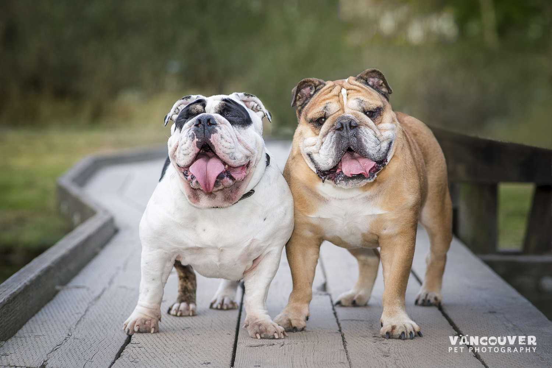 Bulldogs-Port-Moody-1-2.jpg