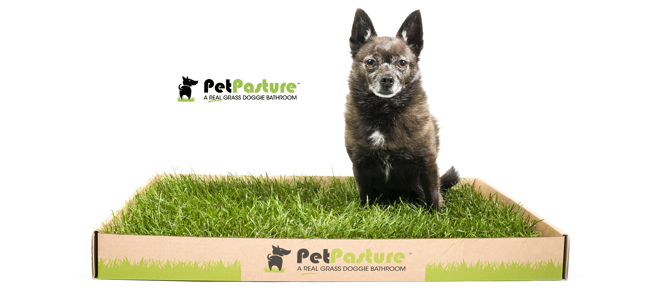 commercial-pet-photography-vancouver.jpg