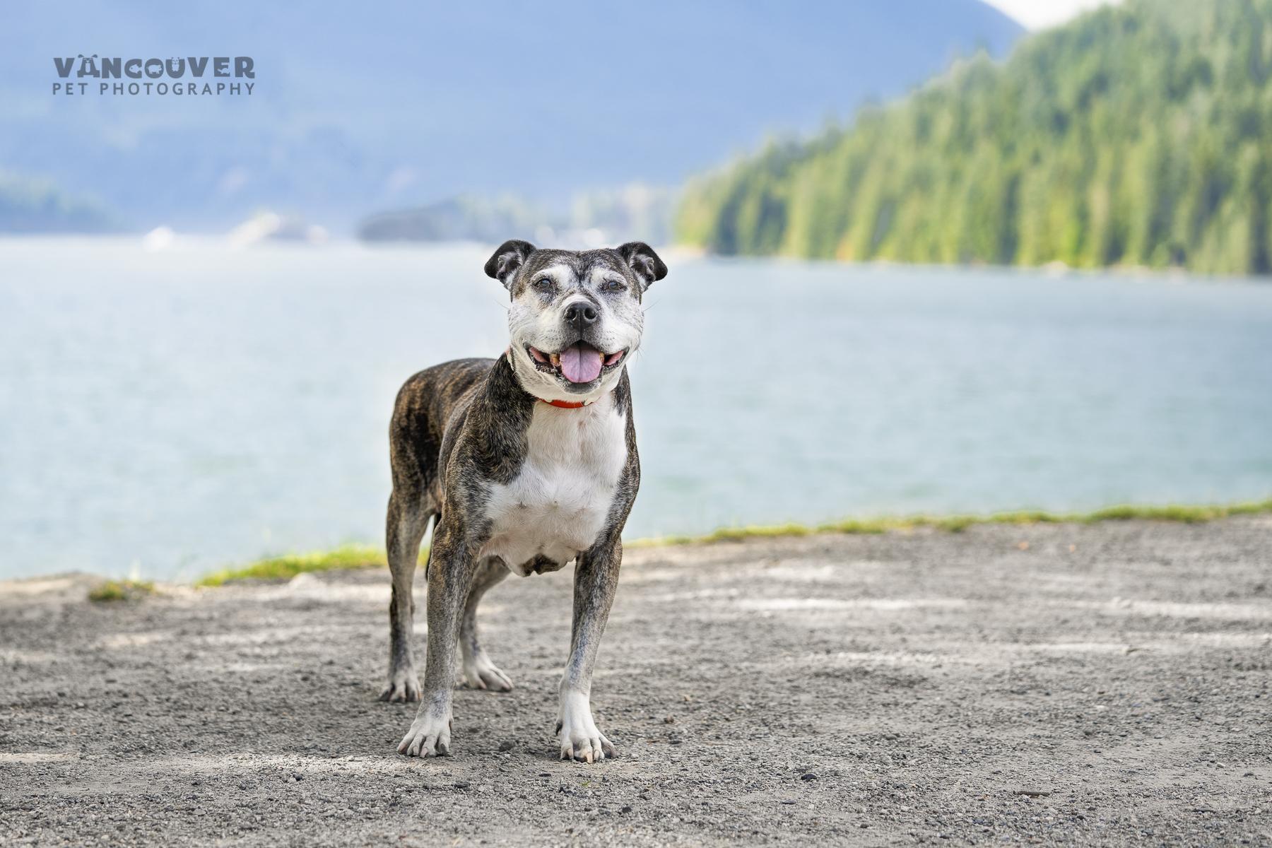 Chica-Burnaby-Dog_Photo.jpg