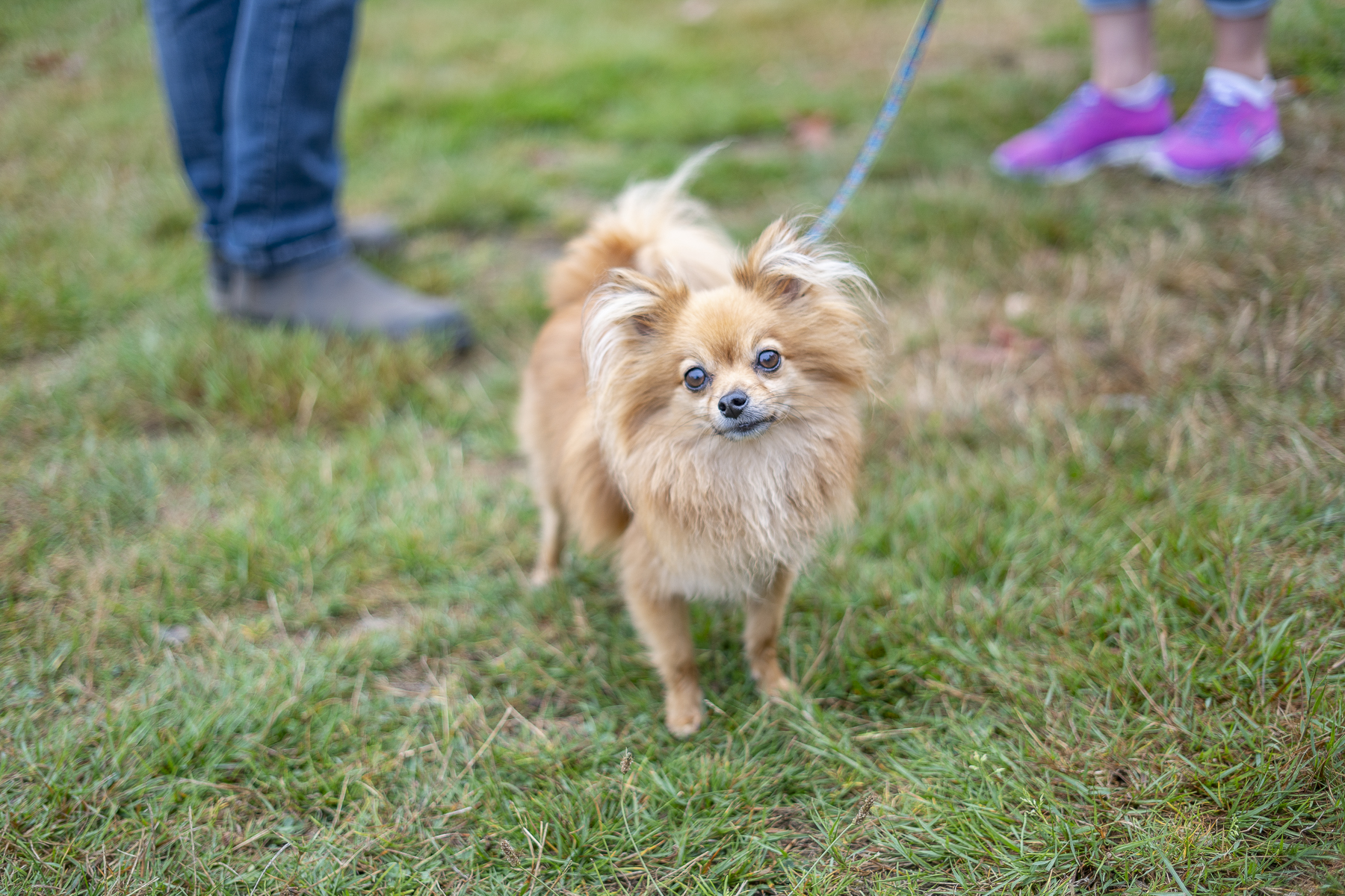 2019_Paws_for_a_Cause_Coquitlam_-4.jpg