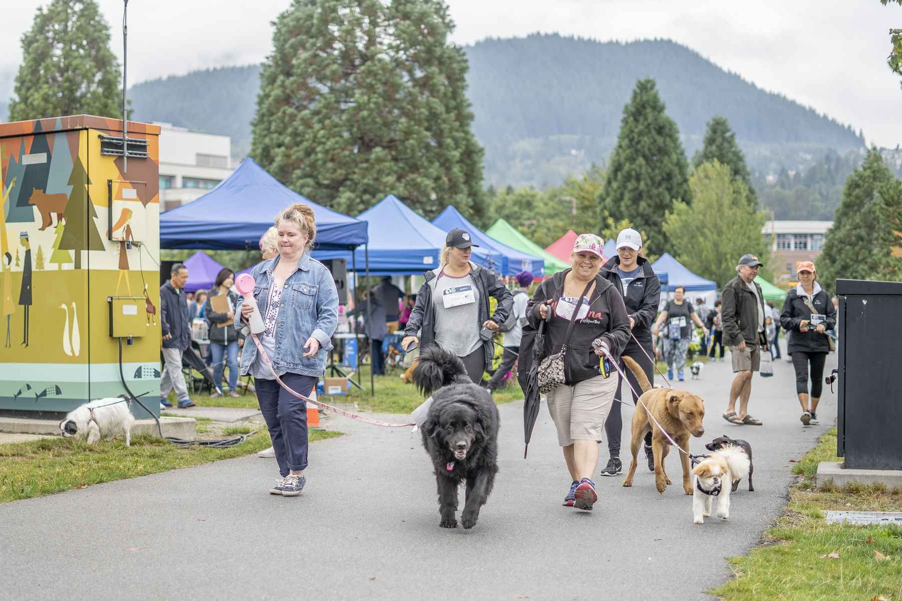 2019_Paws_for_a_Cause_Coquitlam_-11.jpg