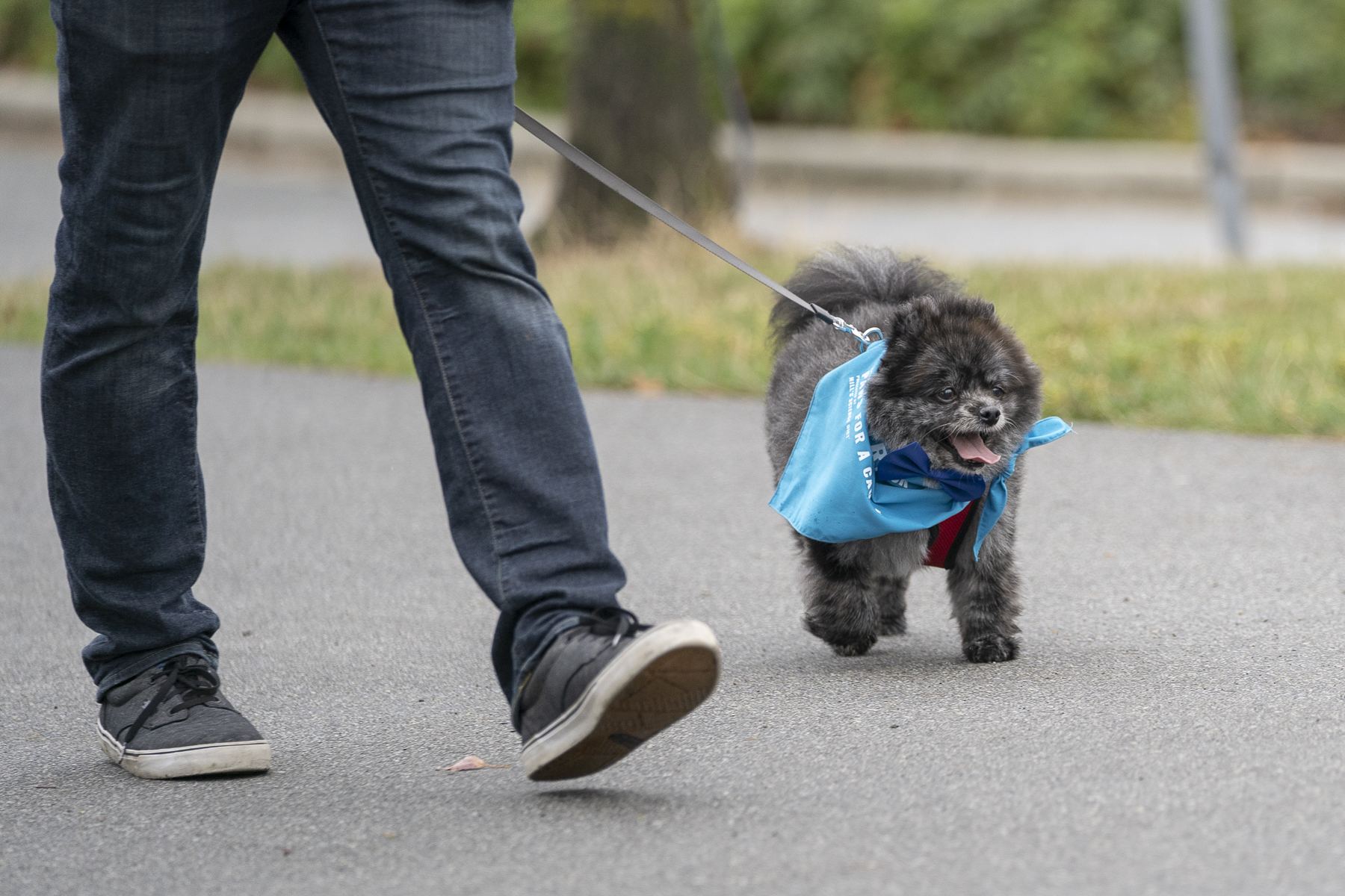 2019_Paws_for_a_Cause_Coquitlam_-13.jpg
