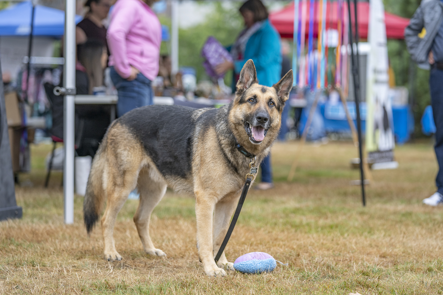 2019_Paws_for_a_Cause_Coquitlam_-20.jpg