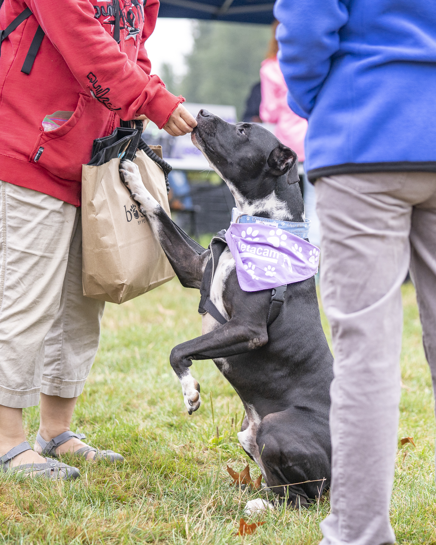 2019_Paws_for_a_Cause_Coquitlam_-19.jpg