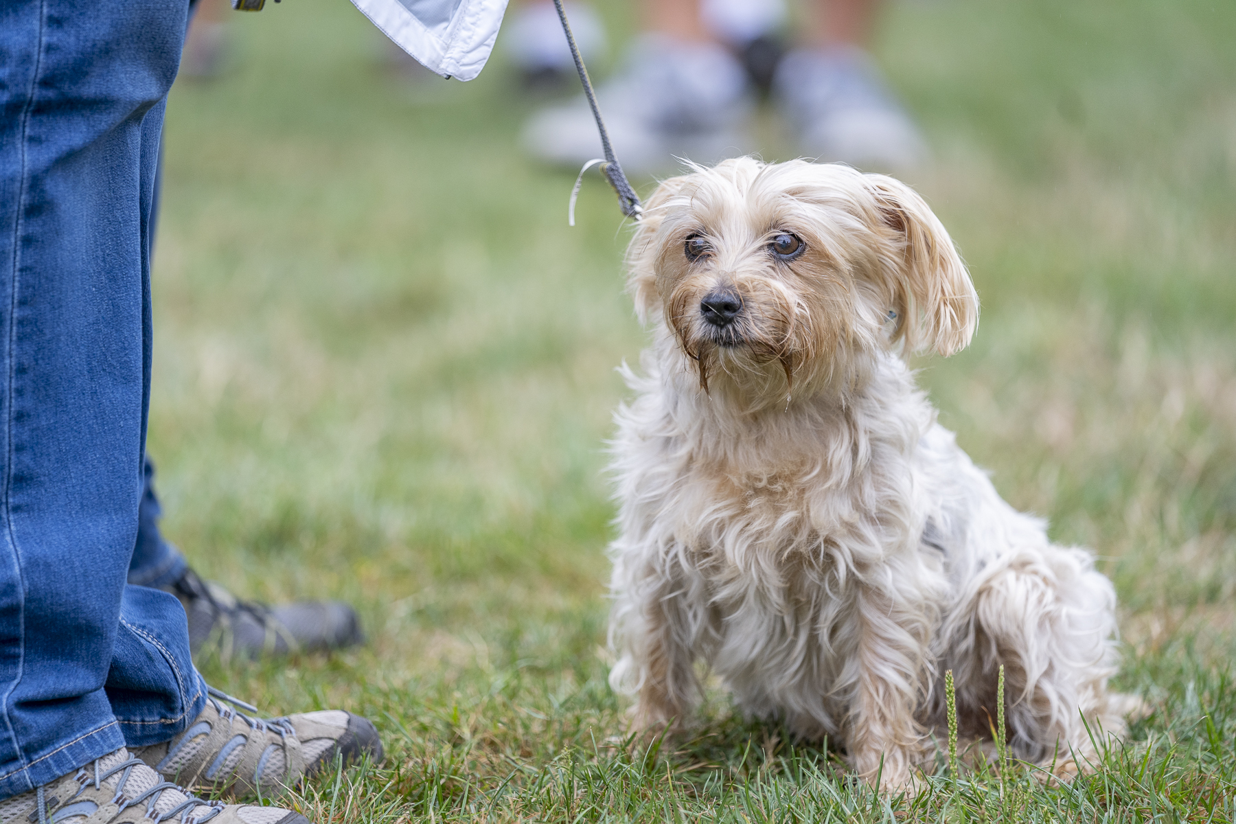 2019_Paws_for_a_Cause_Coquitlam_-23.jpg