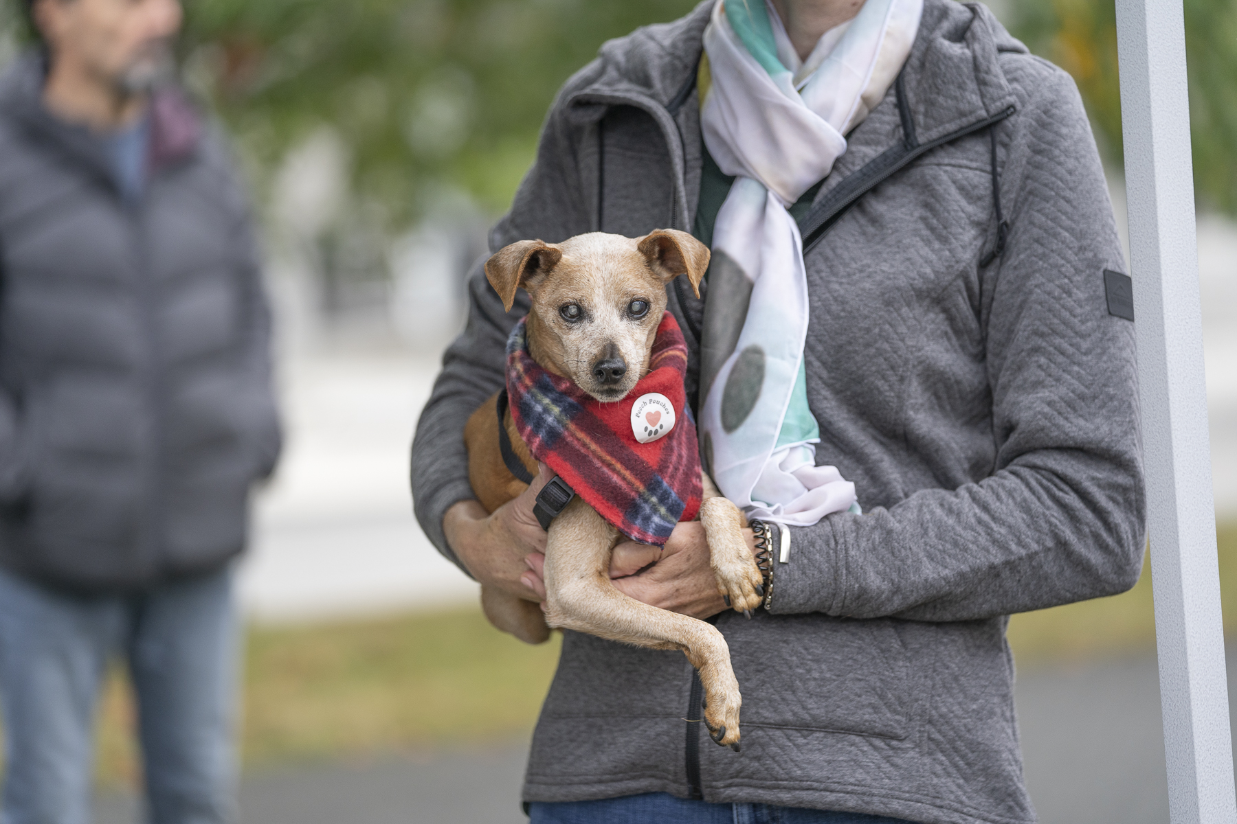 2019_Paws_for_a_Cause_Coquitlam_-25.jpg