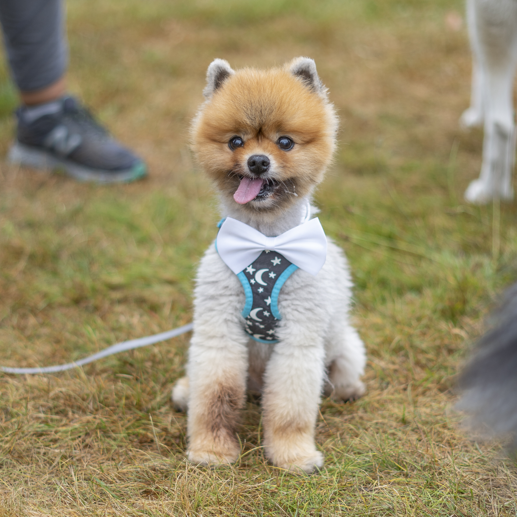 2019_Paws_for_a_Cause_Coquitlam-3.jpg