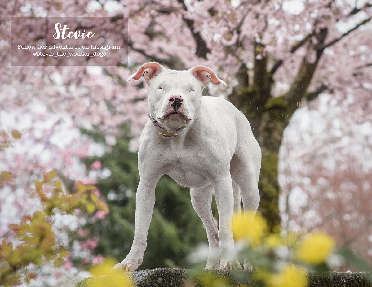 Calendar-Dog-photo-Vancouver-2.jpg