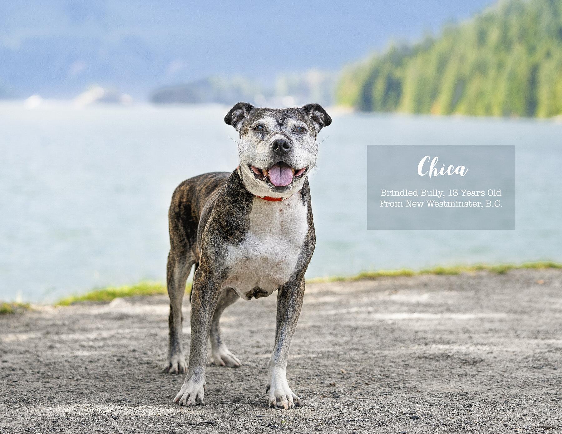Calendar-Dog-photo-Vancouver-8.jpg