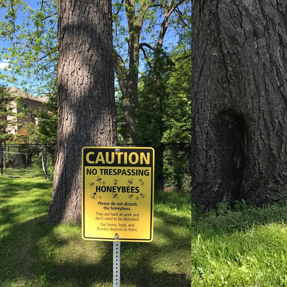 bee tree  1.jpg
