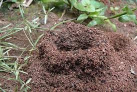 ant mount.jpg