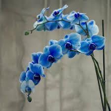 Which flower?
