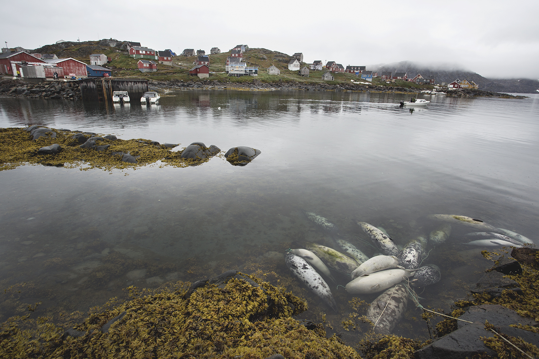 AlinaFedorenko_Kulusuk_Greenland_20.jpg