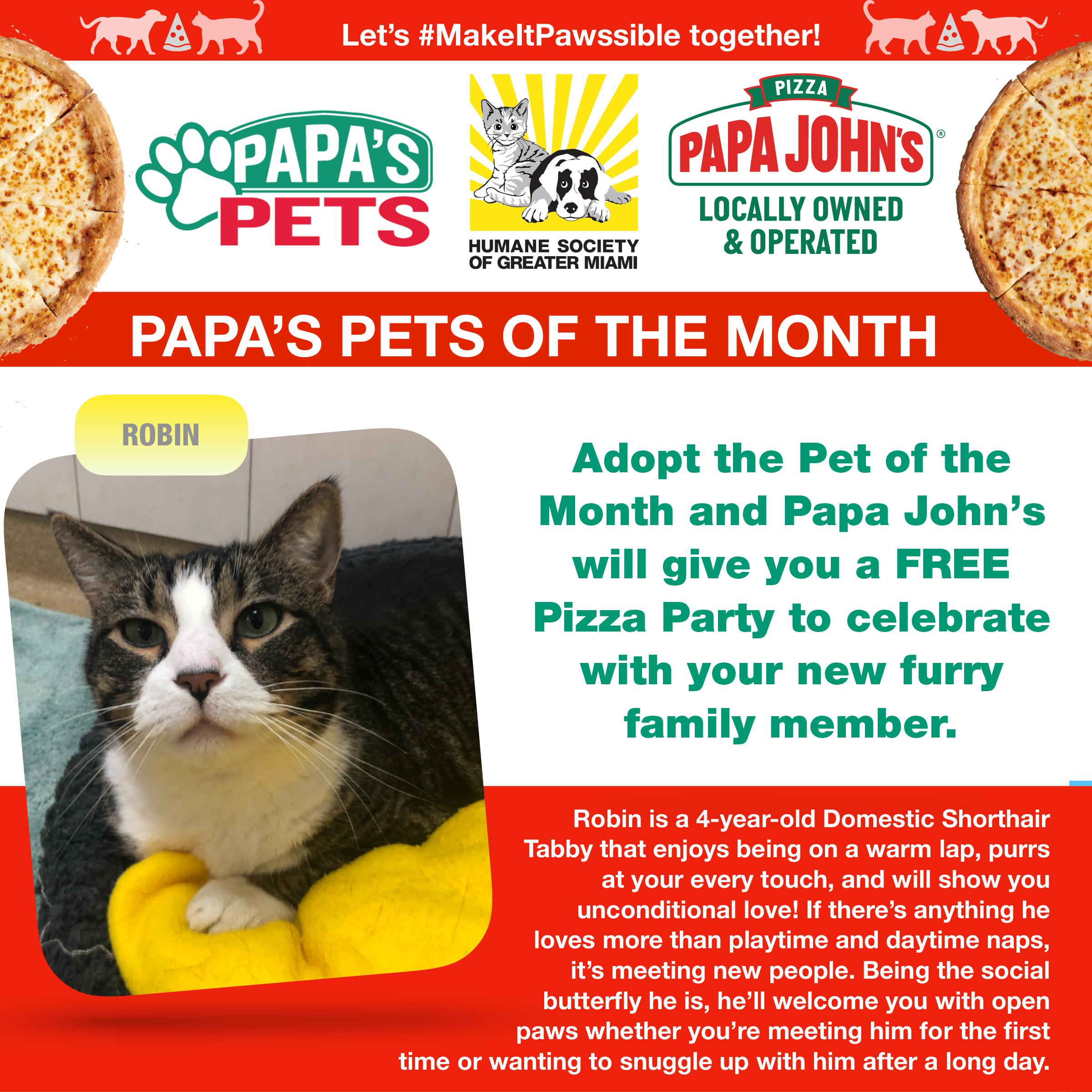Papa's Pets July Cat.jpg