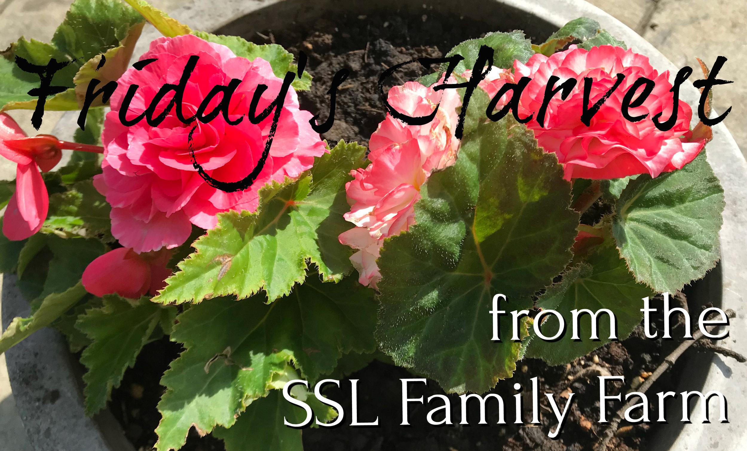 Fridays Harvest 051818 Thumbnail.jpg