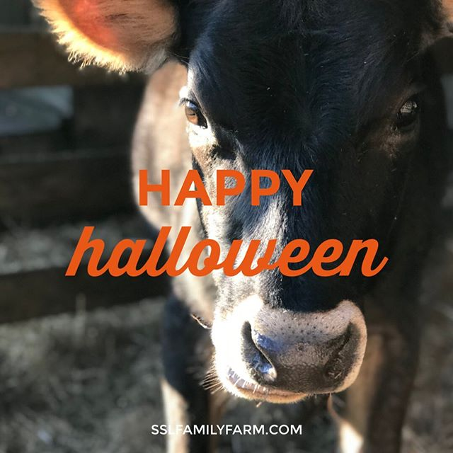 From our farm to yours, hope you all have a great Halloween. Spent my week deep in the mud, digging trenches for the new water hydrants I installed for our pastures. Winter is coming! And fast, too, because our weather forecast is snow tonight. Poor Michigan kids always seem to have to trick-or-treat in their snowsuits. Keep an eye on our stories, my costume is perfect for the week I had. #MapleTheCow #sslfamilydad #happyhalloween #pureMichigan #sslfamilyfarm #farming #growyourownfood #homesteading #eatlocal #gardening #sustainable