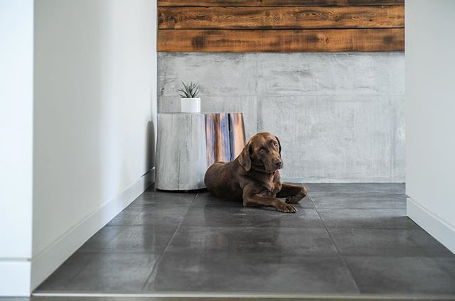 It's been awhile since our sweet girl Kona has made an appearance on our page! She's the best supervisor at the studio and loves to great everyone 🐾 #artsandlabour #mattconcrete #meetmatt Concrete: @matt_concrete • Photo: @tracey_ayton • • • • • • #concrete #concreteoverlay #concretelove  #interiordesign #design #architecture #renovation #newbuild #contractor #artisan #handcrafted #luxury #labsofinstagram #labs #dog