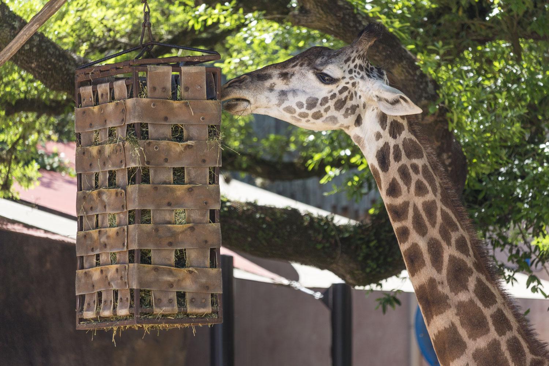 Zoo (5).JPG